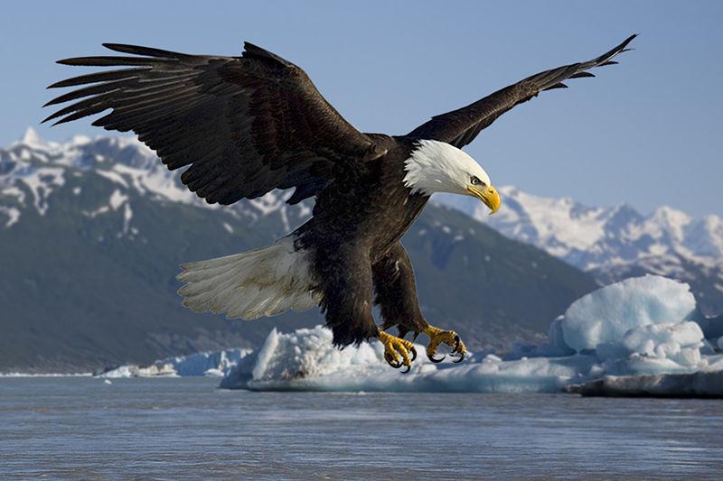 eagle-adler_jagt